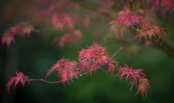 Dünyanın dört bir tarafından sonbahar renkleri