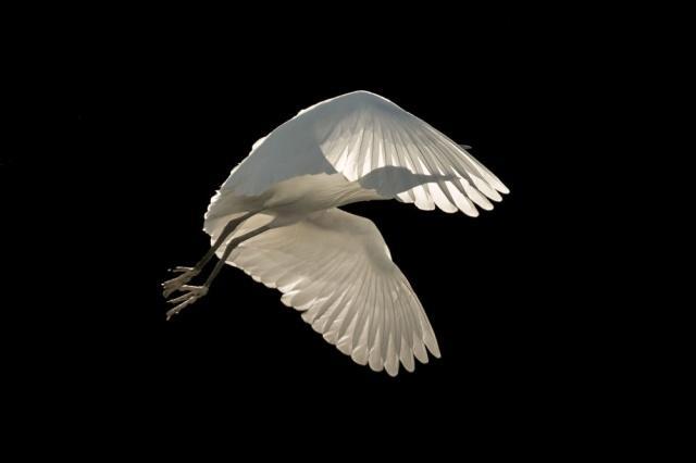 2018 Yılının En İyi Kuş Fotoğrafçısı Yarışması'nın 'Uçan Kuşlar' kategorisinde birincilik kazanan İngiliz fotoğrafçı Sienna Anderson'un çalışması
