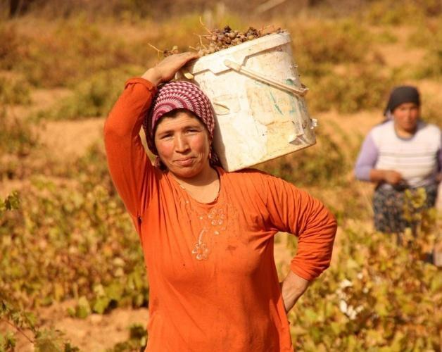Diyarbakır ve Mardin'in köy ve mezralarında Sonbahar'ın gelişi ile birlikte bağbozumu başladı.