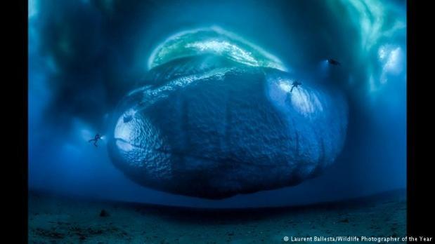 Doğa fotoğrafçısı ve yazar Laurent Ballesta'ya ait ve teknik açıdan mükemmel denebilecek bu fotoğraf pek çok açıdan benzersiz. Zira şimdiye kadar hiç kimse Antarktik'te bu derinliğe dalabilmiş değil.   Deniz dibindeki yaşamı su yüzüne çıkaran bu eser 147 karenin birleşmesiyle oluşmuş.