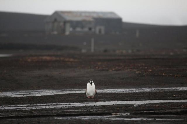 Reuters haber ajansının fotoğrafçısı Alexandre Meneghini, görkemli buzullarla kaplanmış kıtayı gezdi.