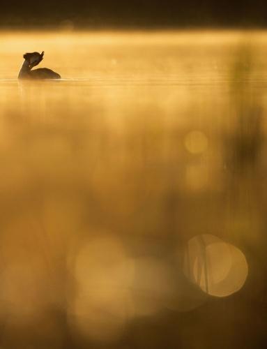 Yarışmanın 'Yılın Genç Kuş Fotoğrafçısı' kategorisinde birincilik kazanan İsveçli fotoğrafçı Johan Carlberg'in çalışması