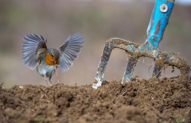 2018 Yılının En İyi Kuş Fotoğrafçısı Yarışması'nın 'Bahçe ve Kent Kuşları' kategorisinde birinciliğe layık görülen Yunan fotoğrafçı Nikos Bukas'ın çalışması
