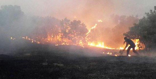 DBP: Valilik Lice'deki yangının söndürülmesine 'güvenlik' gerekçesiyle izin vermiyor