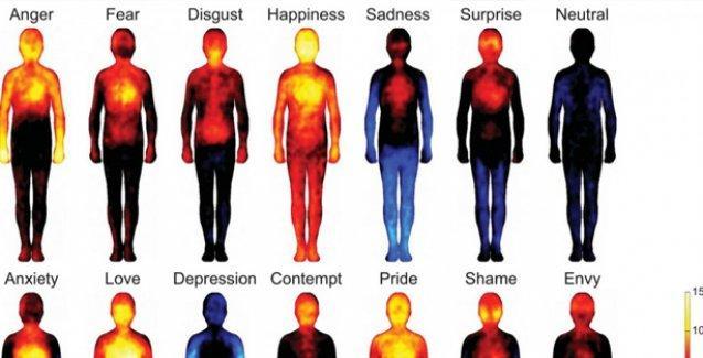 İşte vücudumuzun his haritası
