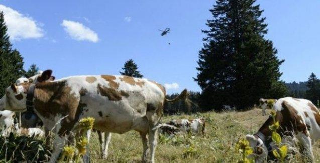 Fransa-İsviçre arasında 'susuz inekler' gerginliği