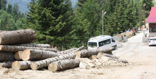 Rize Valisi'nin 'bir tane bile kesmedik' dediği 'Yeşil Yol' için yüzlerce ağaç kesilmiş