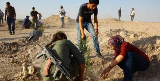 SGDF'li gençlerin hayali Kobani'de 'yeşerdi': 250'yi aşkın fidan dikildi