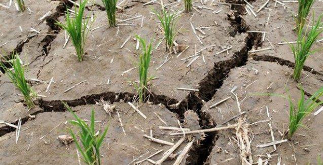 Küresel ısınma 'gıda şoku' riskini yükseltiyor