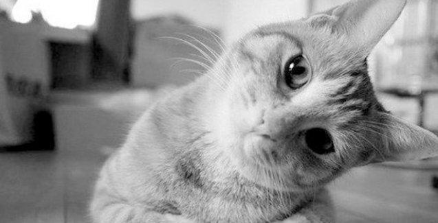 Kediniz sizi o kadar da umursamıyor!