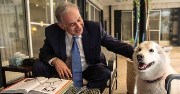 Netanyahu'nun köpeği konuklarını ısırdı!