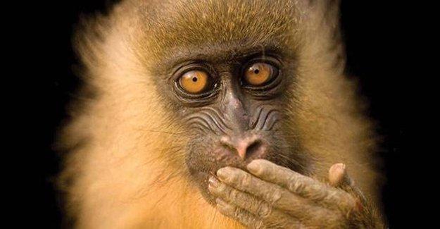 Nesli tükenmekte olan 12 bin hayvan türü, fotoğraflanıyor