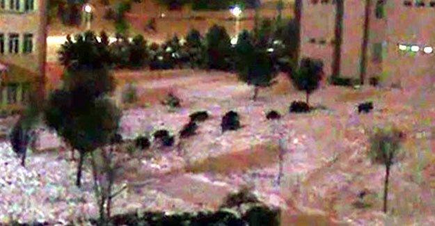 Sivas'a domuz ve kurt sürüsü indi