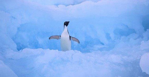 150 bin penguen öldü