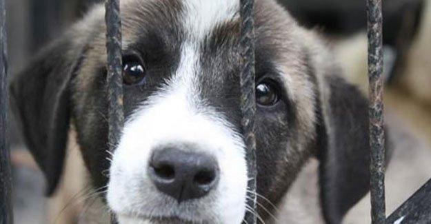 Barınak hayvanlarına yardımcı olmak ister misiniz?
