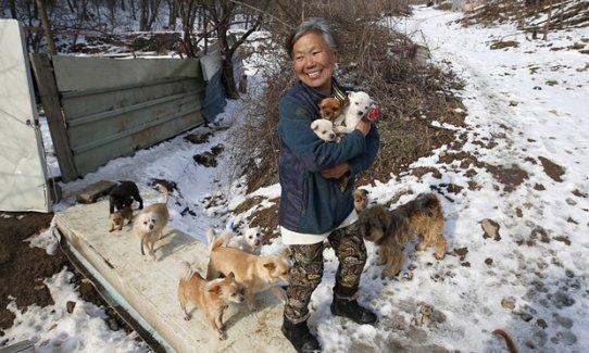 Güney Koreli kadın köpeklerin kahramanı oldu