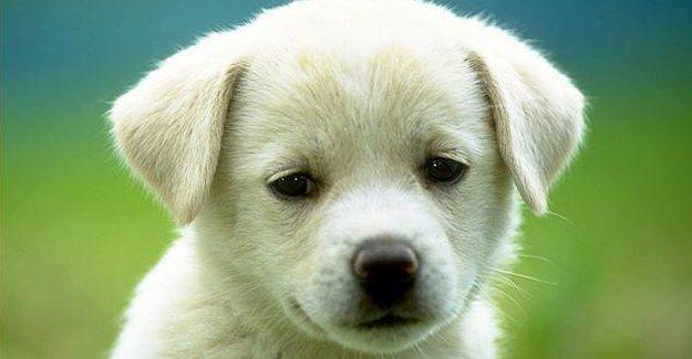 Köpeklerin gözünde manyetik moleküller