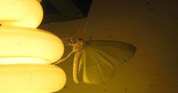 Lamba tipini söyle, böcek türünü bileyim
