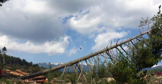 Bursa Keles'teki ağaç katliamına CHP'li Kayışoğlu'ndan tepki