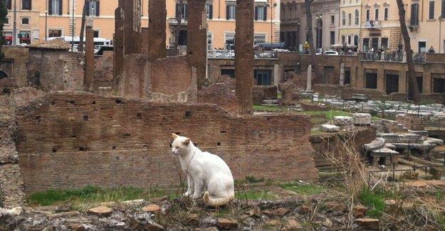 Roma Belediye Başkanı adayından fare krizine kedili çözüm vaadi