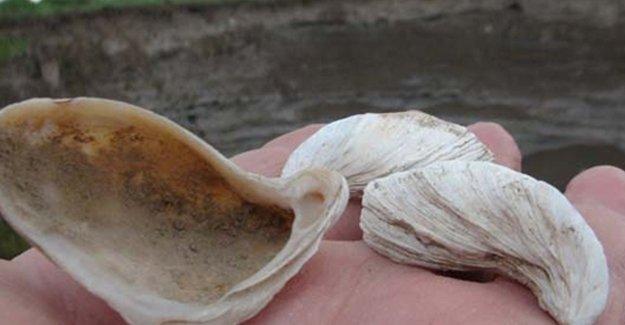 Kars'ta deniz kabuğu bulundu