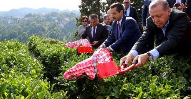 Hasan Cemal: Erdoğan korku imparatorluğu yaratmayı başardı