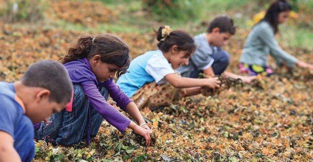 UNICEF: Çocuk işçiliği eğitimden uzaklaştırıyor