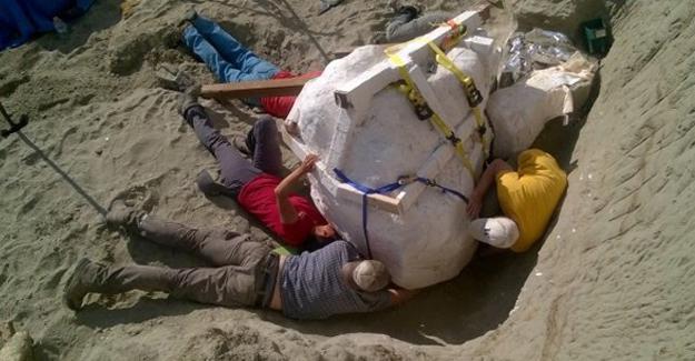Bilinen en büyük etçillerden T. Rex fosili keşfedildi