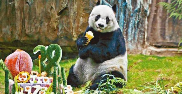 Guinness Rekorlar Kitabı'na giren dünyanın en yaşlı pandası öldü