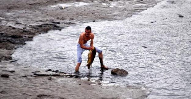 Çanakkale'de gölet kurudu, yüzlerce dev sazan balığı öldü