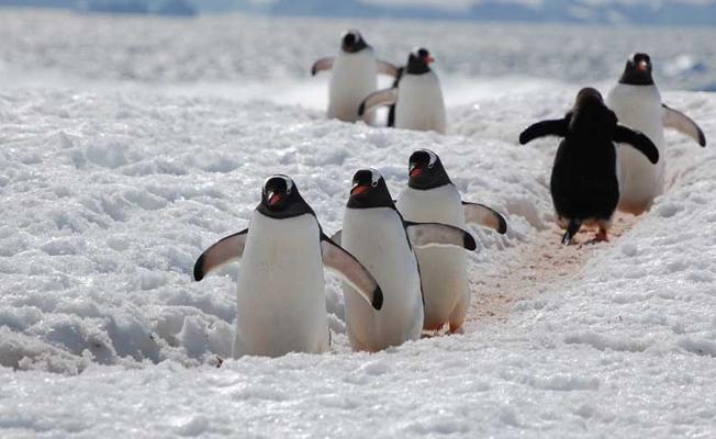 Karda düşmeden yürümenin formülü
