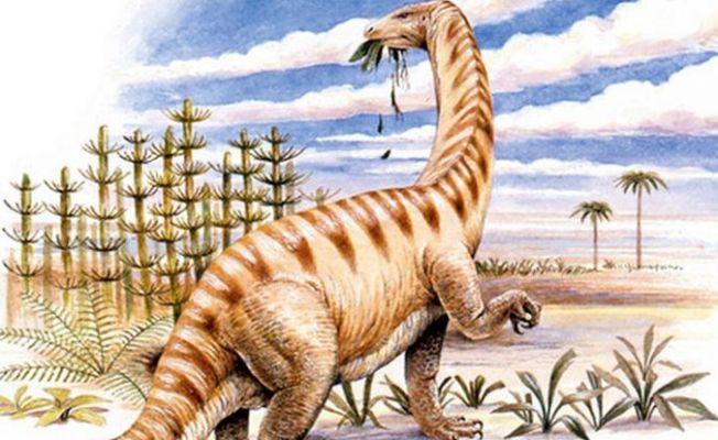 195 milyon yıllık dinozor kemiğinde protein keşfedildi