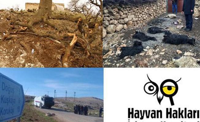 """Devletten HAKİM'e Kuruköy yanıtı: """"Hiçbir İnsan veya Hayvan Zarar Görmedi"""""""