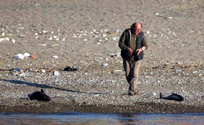 Zonguldak'ta balıkçılar, yunusları silahla öldürdü