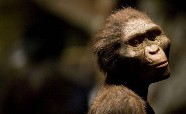 Homo türünün ilk evrimi açık ve kurak bir ortamda başladı