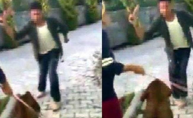 Bodrum'da köpeği levyeyle döven saldırgana hapis istemi