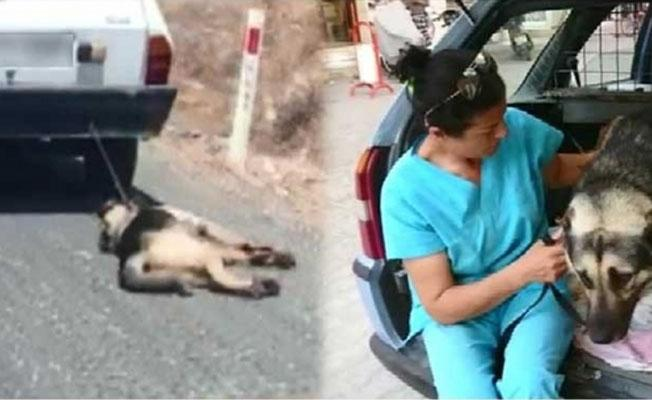Köpeği otomobile bağlayıp sürükledi!