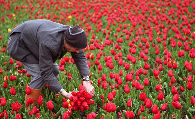 Hollanda'dan ithal edilen çiçekler devlet sırrı oldu