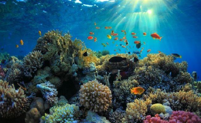 Büyük Set Resifi artık kurtarılamayabilir