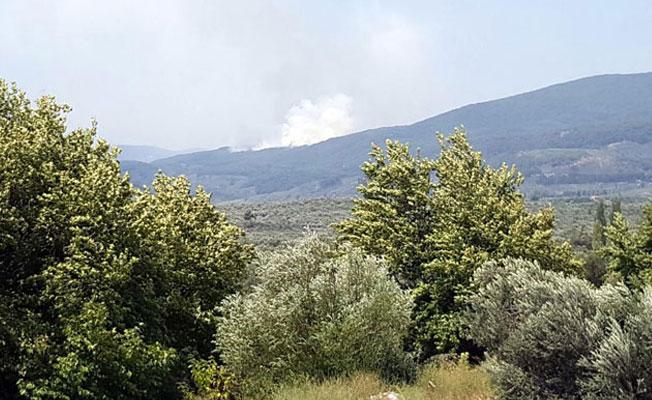 Kundaklama şüphesi: Kazdağları'nda 4 ayrı noktada orman yangını