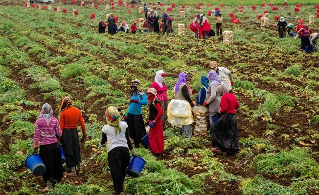 Tarım işçisi kadınlar: Yevmiyemiz ihtiyacımızı karşılamıyor