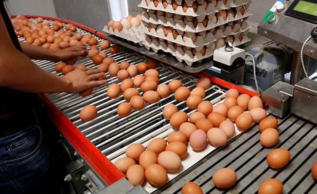 Avrupa'daki 'zehirli yumurta' skandalı ardından Türkiye'de inceleme