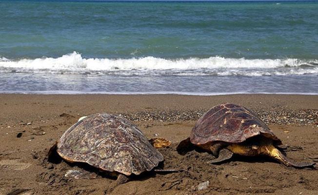 """""""Bazı insanlar kaplumbağaların üzerine çıkıyor, saldırı olmazsa ısırmazlar"""""""