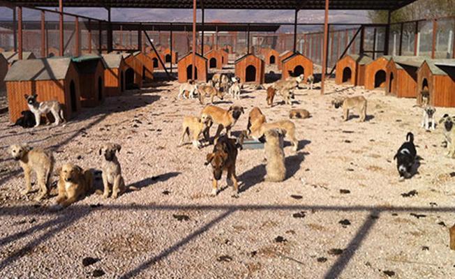 Belediye barınaklarında hayvanlar 10 gün 'aç susuz' bırakıldı