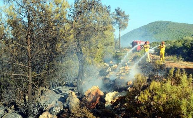 Bodrum'da bir hektar ormanlık alan küle döndü