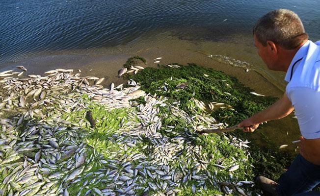 Bursa'da dokuz ayda üç kez toplu balık ölümü