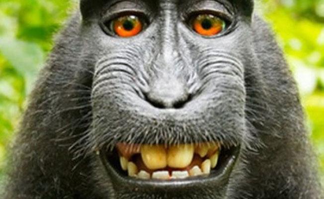 'Maymun selfiesi' davasında telif hakkını fotoğrafçı kazandı