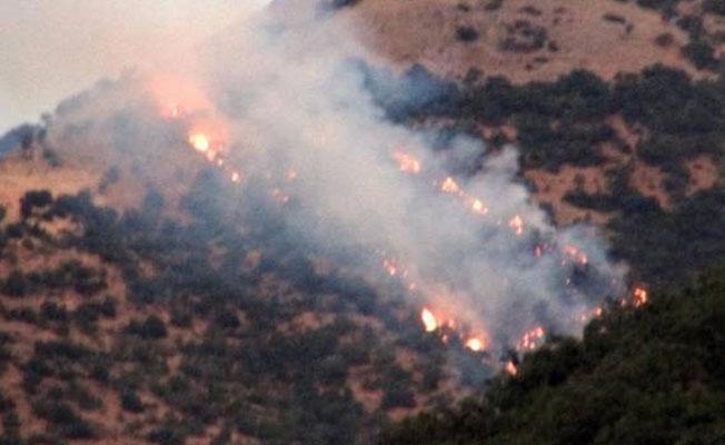 Dersim'de orman yangını