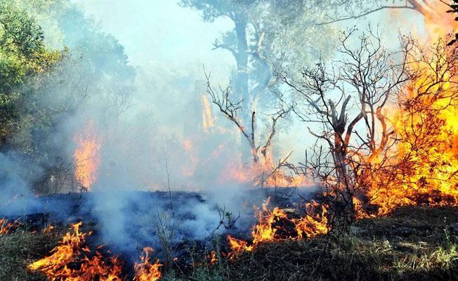 HDP'li Ayhan:Orman Bakanlığı sitesinde Dersim'deki orman yangınları neden yok?