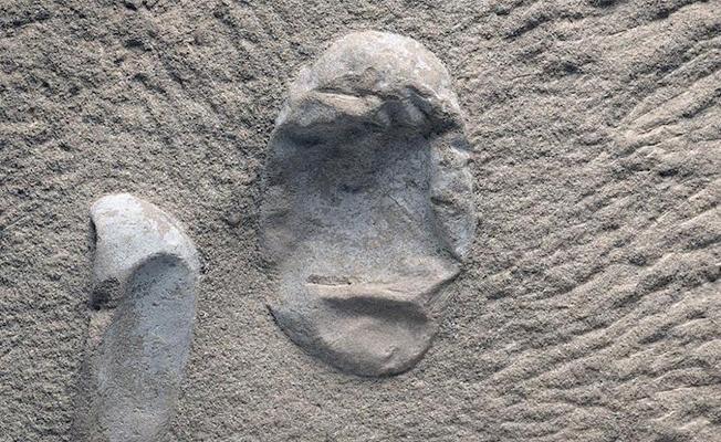 Uçabilen en büyük canlılara ait 200'den fazla yumurta fosili bulundu